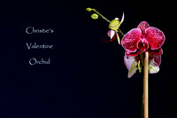 Christie's Orchid